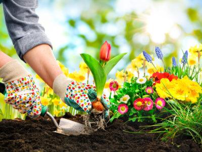 Giardinaggio e salute